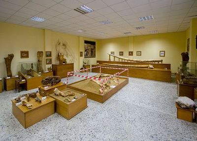 Museum of Paleontology